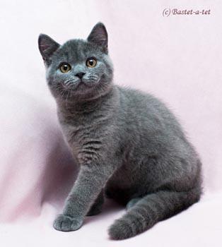 чеширский кот настоящий фото
